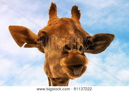 Portrait Of A Nice Giraffe