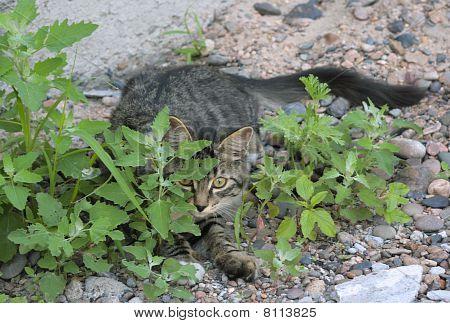 Kitten On The Hunt