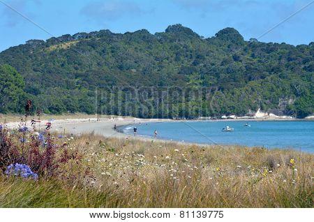Cooks Beach - New Zealand