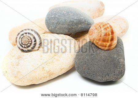 Snails On Stones