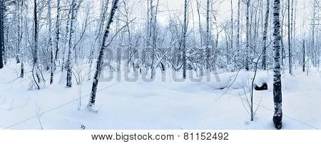 Snow in winter forest. Tinted picture