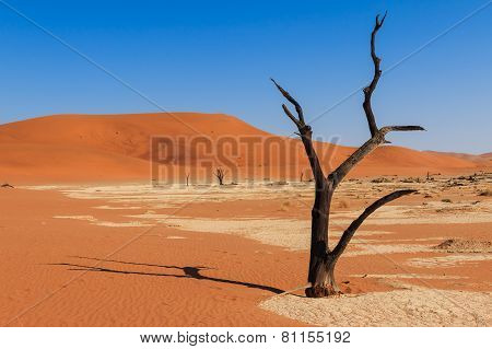 Close Up Tree Deadvlei Valley Namibia