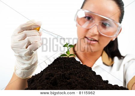 Scientist Pouring Liquid On Plant