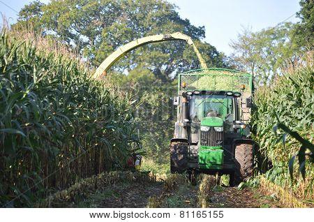 corn harvester in the Corn crop