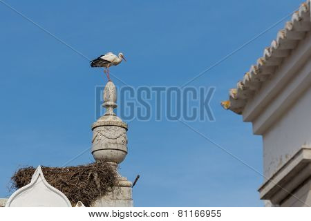 A stork on top of a monument in Faro, Algarve, Portugal