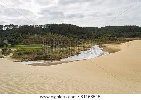 Sand Dunes And Green Forest