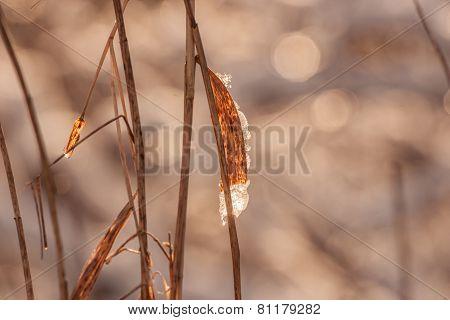 Melting Ice On A Leaf