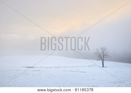 Foggy Snowy Sunrise with Lone Tree