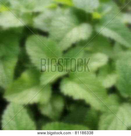 organic plant with blurred effect background