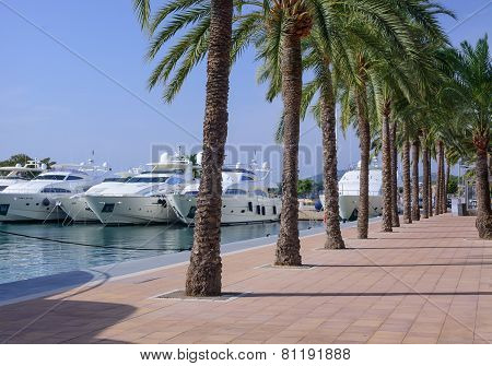 Yachts And Palm Trees