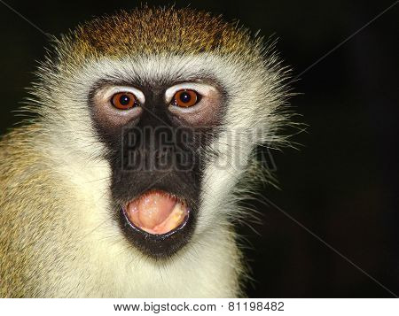 Monkey Is Outraged