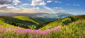 stock photo of mountain-high  - composite landscape with high wild grass and purple flowers on the top of high mountain in morning light with rainbow - JPG