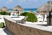 image of yucatan  - Mexican iguana at Cancun Beach on the Yucatan - JPG