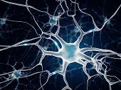 stock photo of neuron  - Neurons In The Brain - JPG