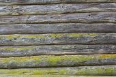 picture of hillbilly  - Old wooden logs wall covered with a green moss - JPG