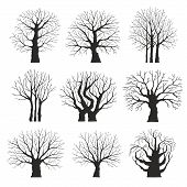 pic of linden-tree  - Collection of silhouettes of different trees - JPG