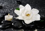 picture of gardenia  - Spa still with gardenia flower and candle on pebbles  - JPG