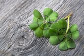 stock photo of four  - Four leaf clover on grey wooden background - JPG