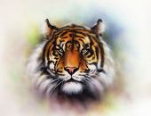 stock photo of airbrush  - beautiful airbrush painting of a mighty fierce tiger head on a soft toned abstract background - JPG