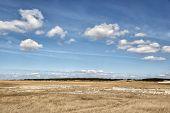 stock photo of dune grass  - Dune grass in near St - JPG
