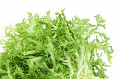 pic of escarole  - closeup of an escarole endive isolated on a white background - JPG