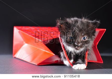 Black Kitten Walking Out Of Gift Bag