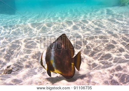 Tropical reef fish at Seychelles