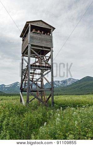 Observation Tower Of Bears And Wildlife. Kamchatka, Nature Park Nalychevo