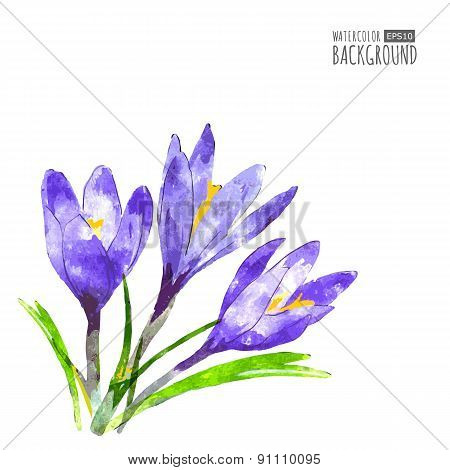 Watercolor Vector Background With Purple Crocus Flower And Green Leaves. Floral  Illustration. Conce