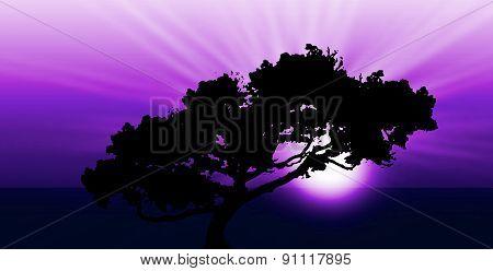 Exotic Sunrise Or Sunset