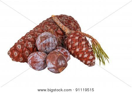 The Pine Cone On The White Background