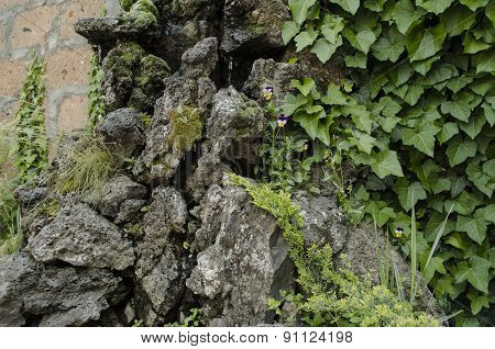 The porous stone covered with moss and small violets