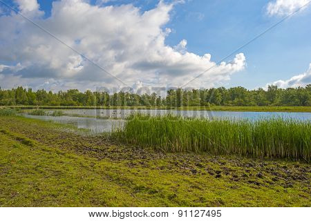The shore of a sunny lake in spring