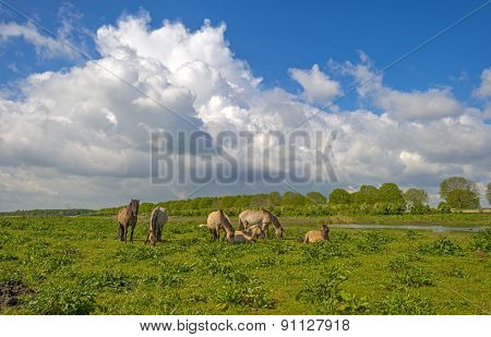 Herd of horses in nature under a blue cloudy sky