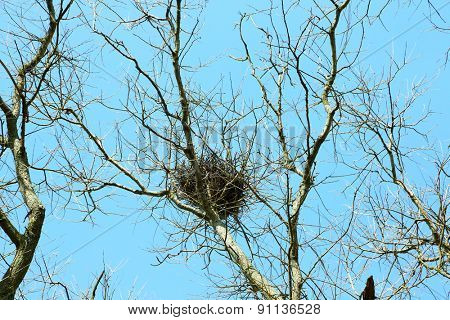 Bird nest in branches on sky background