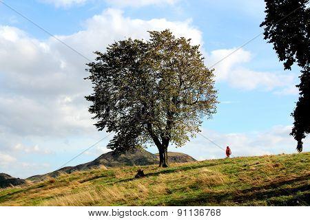 The Tree In The Center Of The Calton Hill In Edinburgh