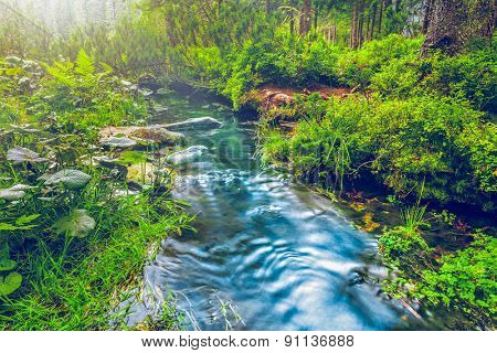 Mountain stream in green forest. Carpathians, Ukraine
