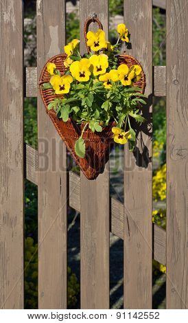 Garden Pansy Decoration