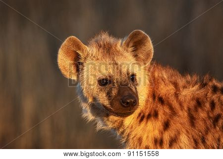 Hyena Cub Portrait