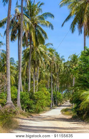 Nice rural road with palm trees on the island in Thailand