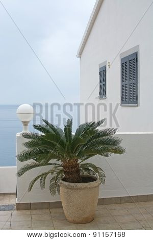 White building with palm tree