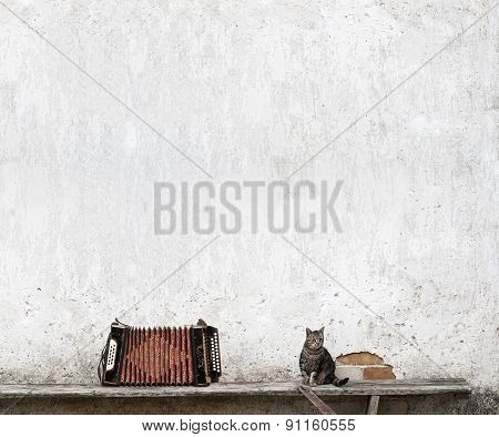 accordion and tabby cat
