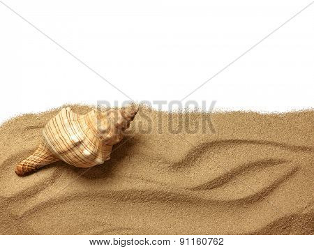 seashells on sand beach. Close up