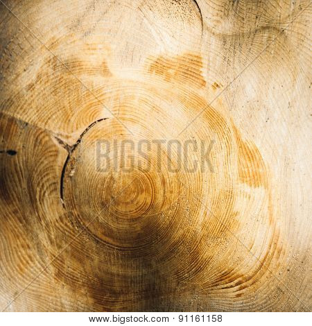 Tree Growth Rings Shown In Felled Timber