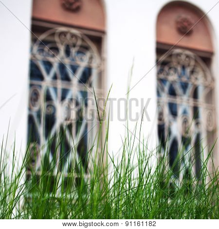 Fresh Blades Of Grass With Large Building Windows On Background