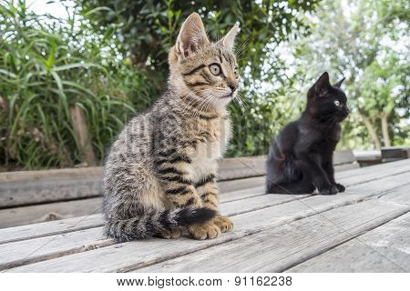 Two Cats On A Table Staring At Something