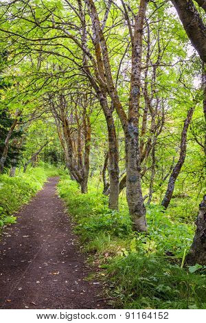 Trail in the woods in Hofdi nature park near Lake Myvatn in Iceland