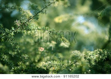 spring meadow leaves
