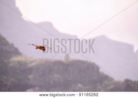 Common Kestrel Hawk Bird