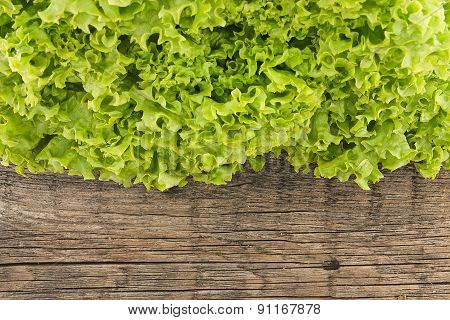 Fresh Green Lettuce Salat On Wooden Background. Healthy Food Concept. Top View
